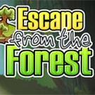 Play Escape from the Forest
